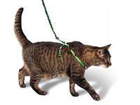 амуниция для кошек1