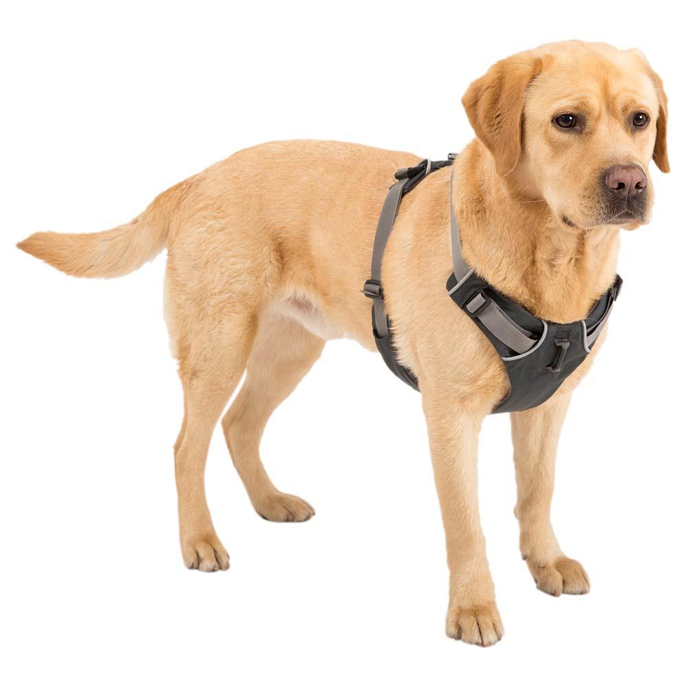 медали собачья шлейка картинки подарок друзьям